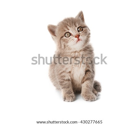 Small cute kitten, isolated on white - stock photo