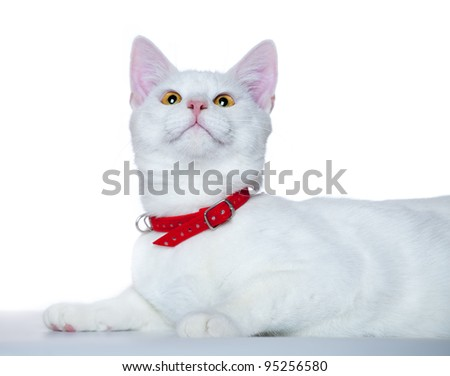 small cute kitten isolated on white - stock photo