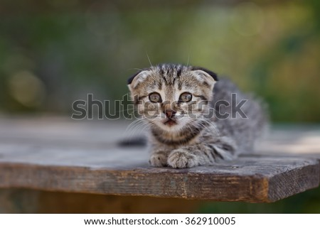 Small cute kitten lying in the summer on a wooden table in the garden. Selective focus