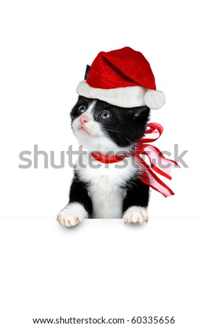 small cute kitten with santa hat isolated on white - stock photo