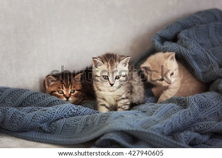 Small cute kittens on couch - stock photo