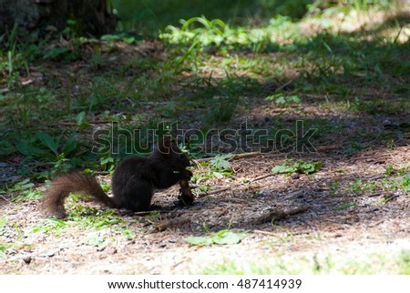 Small cute squirrel, as an attraction, entertaining children and people in the park on Zlatibor
