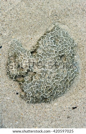 small dead coral reef on the white sand beach - stock photo