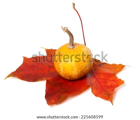 Small decorative pumpkin on red autumn maple-leaf. Isolated on white background - stock photo