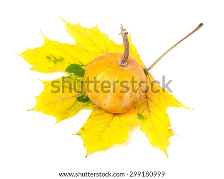 Small decorative pumpkin on yellowed autumn maple-leaf. Isolated on white background - stock photo