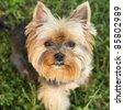 small dog - stock photo