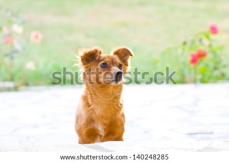 small dog - stock photo