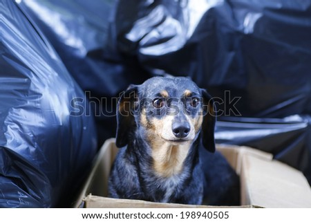 Small dog in dirty box on garbage-strewn sidewalk looking sad & frightened after having been discarded - stock photo