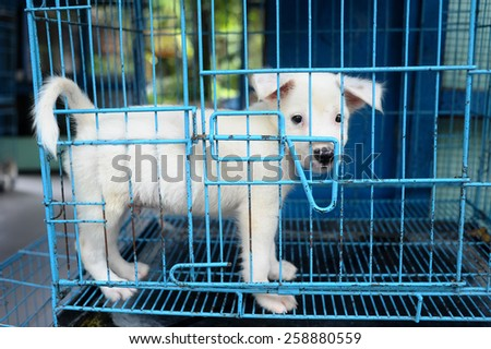 Small dog in the cage - stock photo
