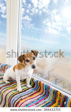 Small dog Jack Russell terrier sitting on the windowsill colored striped rug near the large window with view to the solar summer sea beach (coast, shore, littoral ) - stock photo