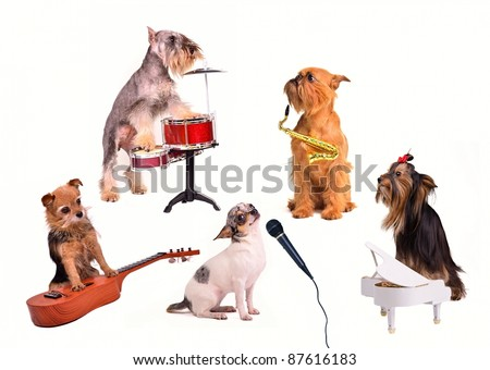 Small Dog jazz band funny performance in a studio - stock photo