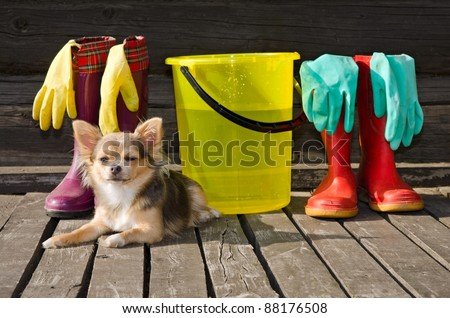 Small dog lying at sunny veranda near items for cleaning and rubber boots - stock photo