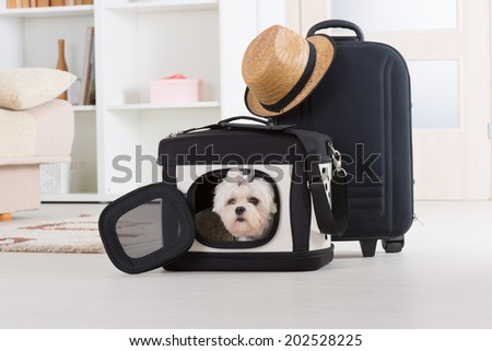 Small dog maltese sitting in his transporter or bag and waiting for a trip - stock photo