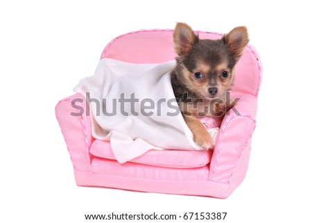 Small Dog's Comfortable Bed - stock photo