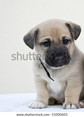 small dog sat and admired - stock photo