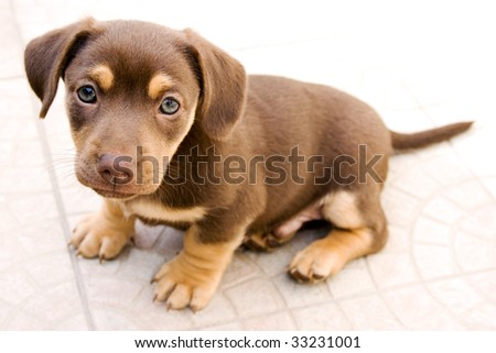 Small dog sitting - stock photo