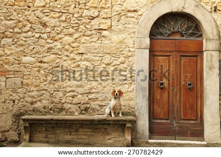 small dog sitting on stone bank in front of the tuscan house, Italy, Europe - stock photo