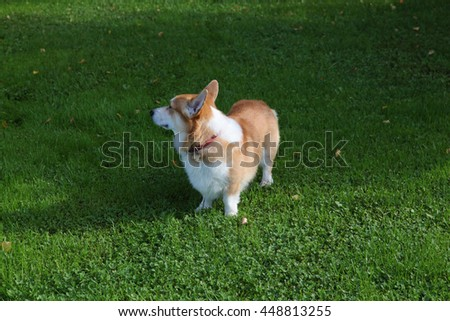 small dog stay on green grass
