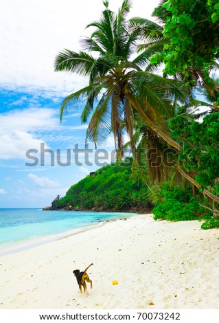 Small Dog under palms in Heaven - stock photo