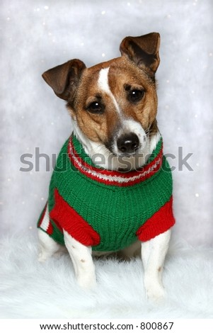 small dog wearing green and red sweater on white winter background - stock photo