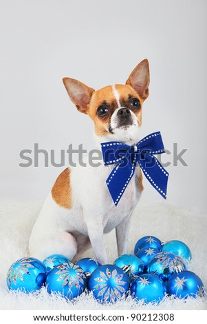 Small dog with bow, surrounded by christmas ornaments.