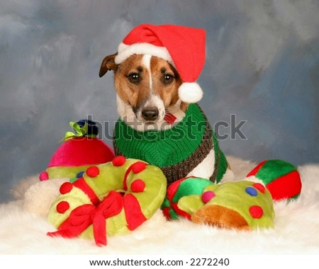 small dog with santa hat and christmas toys
