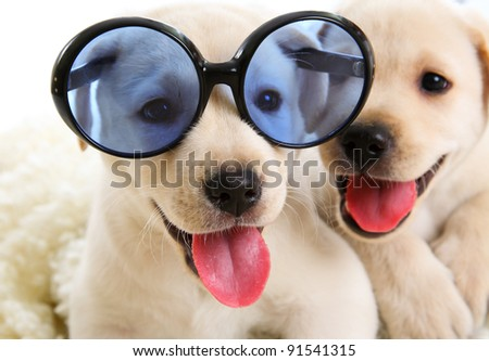 Small dogs have fun looking through the glasses