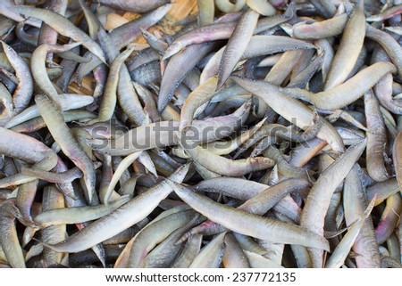 small dried l fish  in market of thailand - stock photo