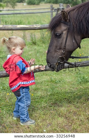 small feeding horse young girl - stock photo