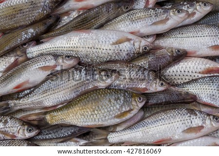 Small fish pile up in the market to buy food to eat - stock photo