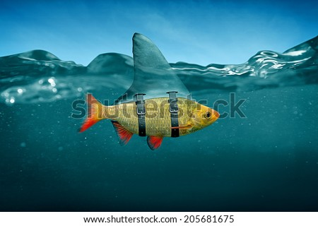 Small Fish with Shark Fin - stock photo
