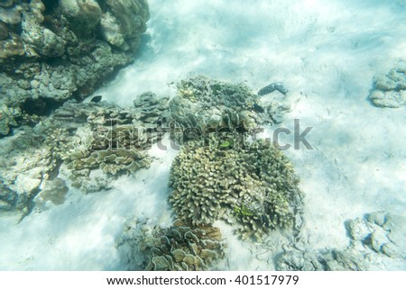 small fishes and coral underwater sea for background use - stock photo