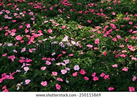 Small flower field. - stock photo