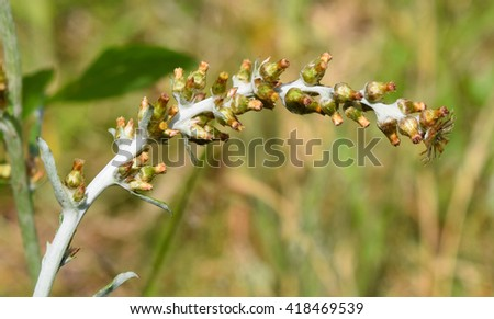 Small flowers in Mississippi - stock photo
