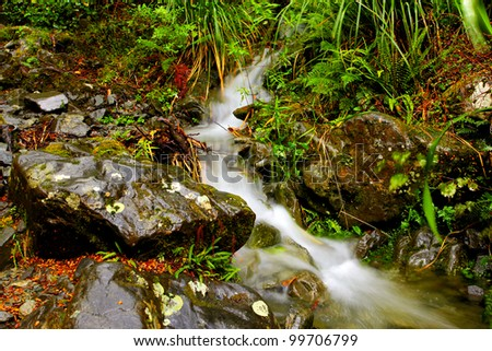 small flowing creek in rainforest - stock photo