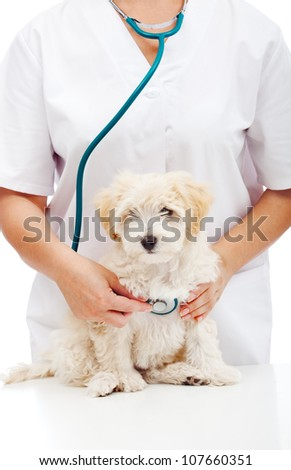 Small fluffy dog at the veterinary doctor being examined - stock photo