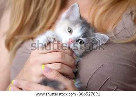 small fluffy kitten in the hands of women