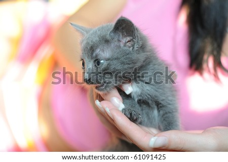 Small fluffy kitten on hands of mistress. - stock photo