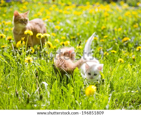 small fluffy kittens with their mother cat on the grass - stock photo