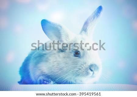 Small fluffy rabbit beige. Toned - stock photo