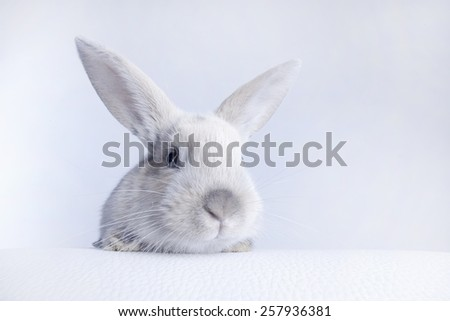 Small fluffy rabbit white - stock photo