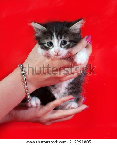 Small fluffy tabby kitten sitting on hands on red background - stock photo