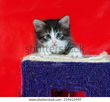 Small fluffy tabby kitten sitting on red background - stock photo