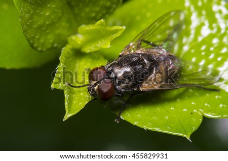 Small fly insect on green leaf  - stock photo