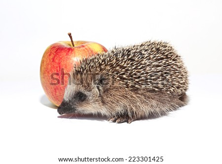 Small forest hedgehog with a big red apple - stock photo