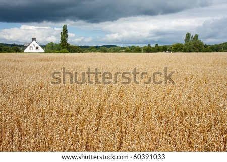 Small french cottage in the field with threatening thunderstorm - stock photo