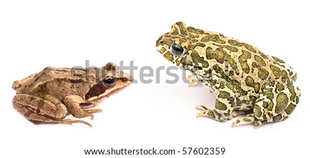 Small frog against big toad isolated on white background - stock photo