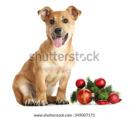 Small funny cute dog with Christmas toys, isolated on white - stock photo
