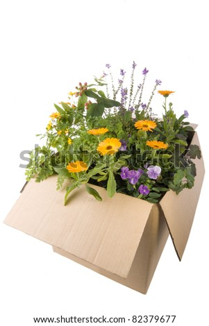 Small garden in a box e-commerce delivered for city living - stock photo