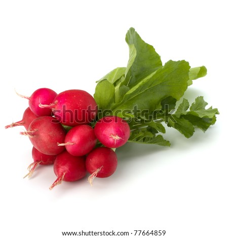 Small garden radish isolated on white background - stock photo